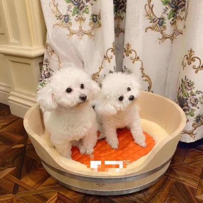 爱马仕宠物狗窝/猫窝 收藏级宠物用品 爱马仕的窝 给你的狗子/猫主子最高端的小床jwr090404